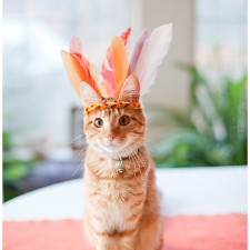 aggie the cat Orange kitten with feather hat