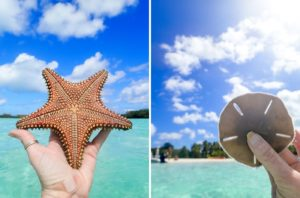 tradewinds catamaran vacation abacos bahamas starfish sand dollar