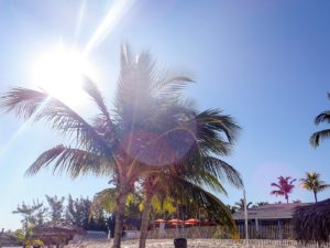 treasure cay palm tree