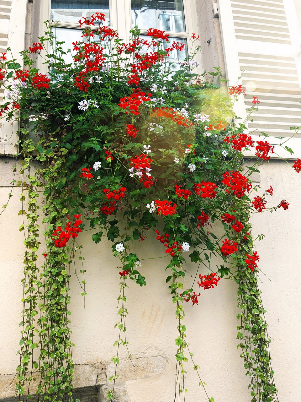 5 essential tips for planning your next vacation / geranium flower box in beaune france