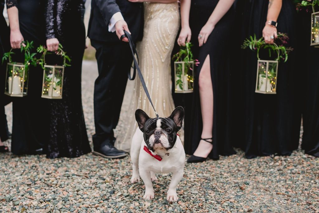 french bulldog in wedding party