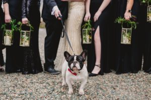 french bulldog in wedding party