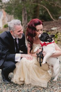 pied french bull dog with red bowtie in wedding